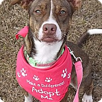 Adopt A Pet :: Daisy - Baton Rouge, LA