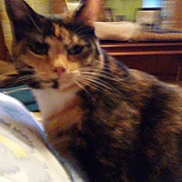 Adopt A Pet :: Chloe - McEwen, TN