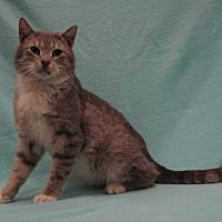 Adopt A Pet :: Percy - Redwood Falls, MN