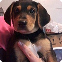 Adopt A Pet :: Ackley - Mooresville, IN
