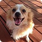Adopt A Pet :: Cooper