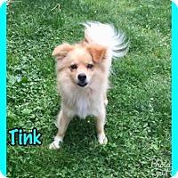 Adopt A Pet :: Tink - Jasper, IN