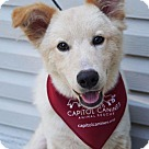 Adopt A Pet :: Cosmo - Adoption Pending