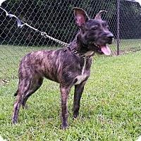 Adopt A Pet :: ARIEL - ROCKMART, GA