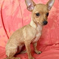 Adopt A Pet :: Lilo - Santa Ana, CA