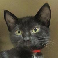 Adopt A Pet :: Kami - Lloydminster, AB