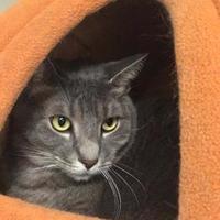 Adopt A Pet :: Remmy - Bradenton, FL