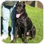 Photo 2 - Cane Corso Dog for adoption in New York, New York - Ben-NJ