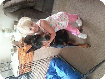 Doberman Pinscher Dog for adoption in Wichita, Kansas - Gabriel