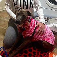 Adopt A Pet :: Nani - Encinitas, CA