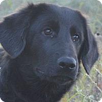 Adopt A Pet :: Whiskey - Denver, CO