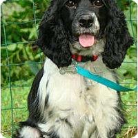Adopt A Pet :: Carlotta - Sugarland, TX