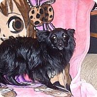 Adopt A Pet :: Frisky - Morristown, TN