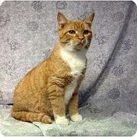Adopt A Pet :: Ernie - Orlando, FL
