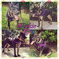 Adopt A Pet :: winkie - hollywood, FL