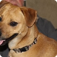 Adopt A Pet :: Fritz - Avon, NY