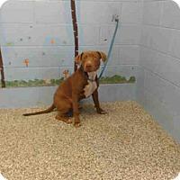 Adopt A Pet :: A504193 - San Bernardino, CA