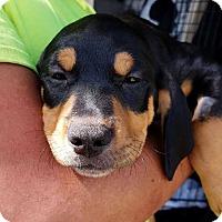 Adopt A Pet :: John - Gainesville, FL