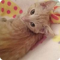 Adopt A Pet :: Marina - North Highlands, CA