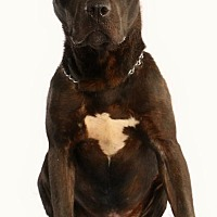 Adopt A Pet :: ABNER - Pegram, TN