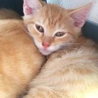 Adopt A Pet :: Pedro - Manteo, NC