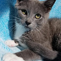 Adopt A Pet :: Bennington - Hornell, NY