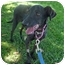 Photo 3 - Whippet Mix Dog for adoption in San Clemente, California - NINA