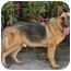 Photo 4 - German Shepherd Dog Dog for adoption in Los Angeles, California - Rocky von Lancaster