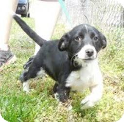 Terrier (Unknown Type, Medium) Mix Dog for adoption in Windham, New Hampshire - Little Rascal