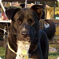 Adopt A Pet :: Bandit - Fresno, CA