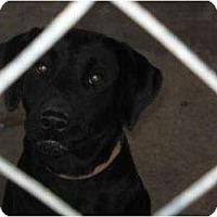 Adopt A Pet :: Stevie - Altmonte Springs, FL