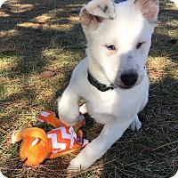 Adopt A Pet :: Linus - Deaf & - Pending Adopt - Post Falls, ID