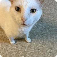 Adopt A Pet :: Windy - Medina, OH