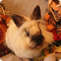 Adopt A Pet :: Tilly - Hillside, NJ