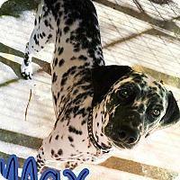 Adopt A Pet :: Max - Odessa, TX