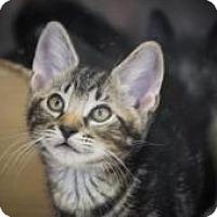 Adopt A Pet :: Easter - Dallas, TX