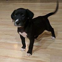 Adopt A Pet :: Ouizer - Moyock, NC