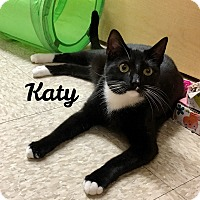 Adopt A Pet :: Katy - Foothill Ranch, CA