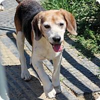 Adopt A Pet :: Ellis - Liberty Center, OH