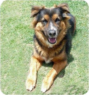 Anatolian Shepherd Mix Dog for adoption in San Clemente, California - ATHENA