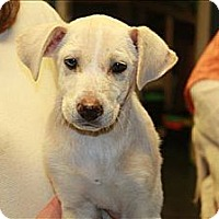 Adopt A Pet :: Hope(ADOPTED!) - Chicago, IL