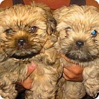Adopt A Pet :: Jackson & Bentley - PENDING - kennebunkport, ME