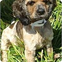 Adopt A Pet :: Durango - Sugarland, TX
