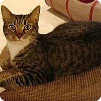 Adopt A Pet :: Rocky - Port Republic, MD