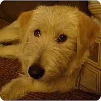 Adopt A Pet :: LOST !!!!! - Wakefield, RI