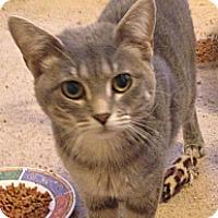 Adopt A Pet :: Carina - St. Louis, MO