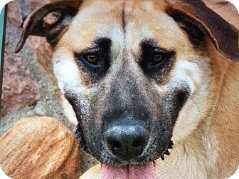 Labrador Retriever Mix Dog for adoption in Los Angeles, California - GUS VON GAGE