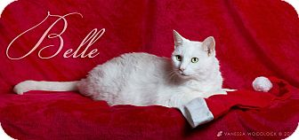 Domestic Mediumhair Cat for adoption in Goldsboro, North Carolina - Belle
