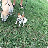 Adopt A Pet :: Joel - Santa Ana, CA