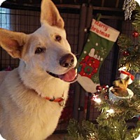 Adopt A Pet :: Gandalf - Green Cove Springs, FL